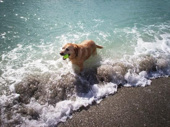 Venice Paw Park – THE BEACH for Dogs!